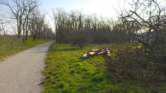 Dieser Wald soll einem sogenannten Gewerbegebiet zum Opfer fallen
